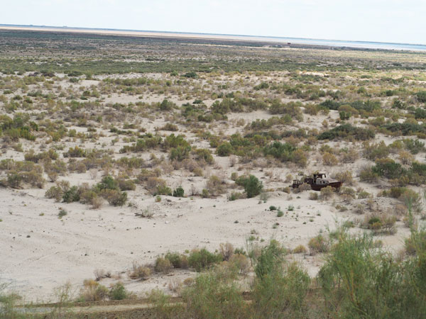 砂漠化防止のため沿道やアラル海に植えられているサクサウール
