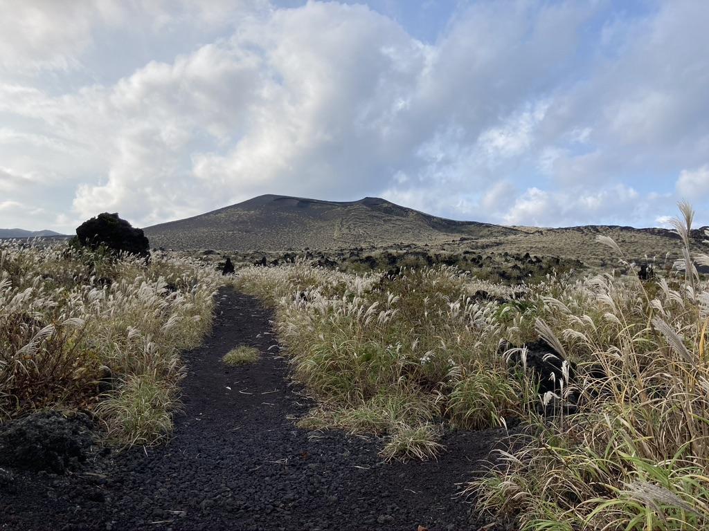「いつか森になる道」から望む三原山