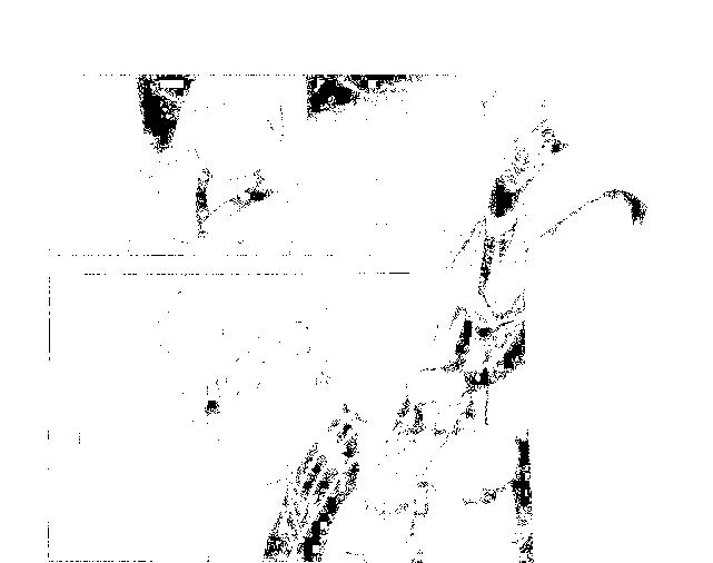 f:id:Nuohman:20170121063124p:plain