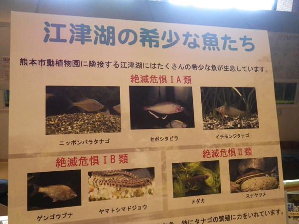 f:id:OIKAWAMARU:20150725210204j:image