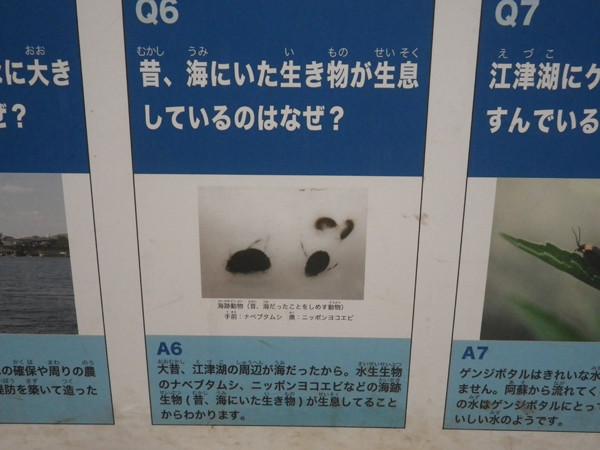 f:id:OIKAWAMARU:20150725210206j:image