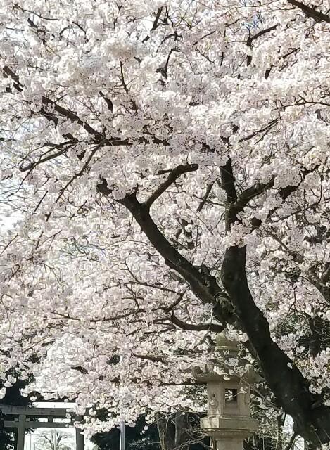 f:id:OOTANI-takanori:20170409131350j:image