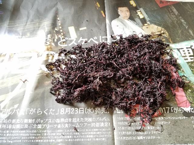 f:id:OOTANI-takanori:20170625094807j:image