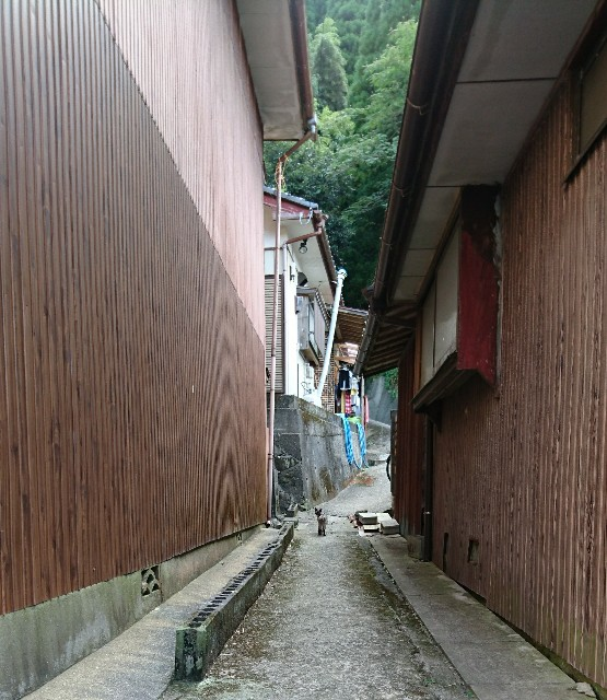 f:id:OgumakiVet:20180715205947j:image