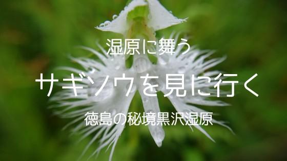 f:id:OgumakiVet:20180902204603j:image