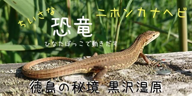 f:id:OgumakiVet:20180904005511j:image