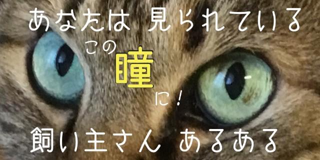f:id:OgumakiVet:20180905104141j:image