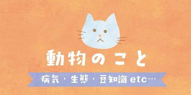 f:id:OgumakiVet:20190308084712j:image