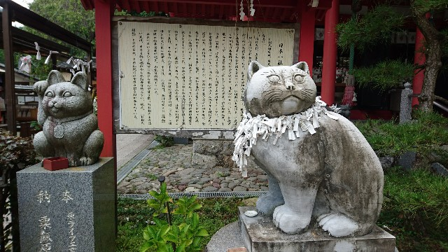 f:id:OgumakiVet:20190806124404j:image