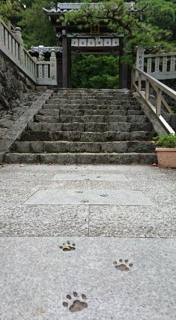 f:id:OgumakiVet:20190806160415j:image
