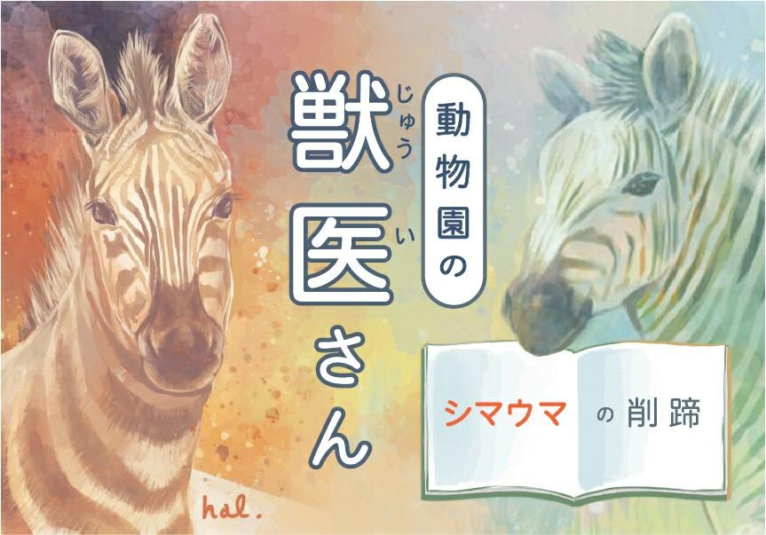 f:id:OgumakiVet:20200319212524j:image