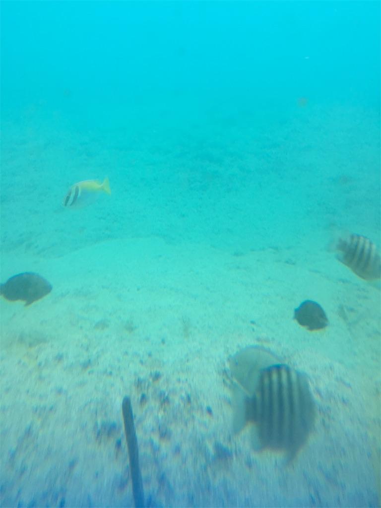f:id:Okinawa-US:20180407194932j:image