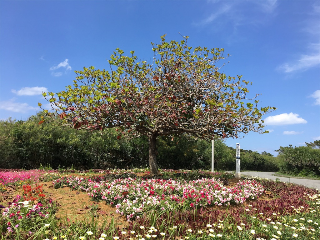 f:id:Okinawa-US:20180408195038j:image
