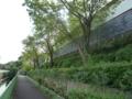 神田川緑道♪
