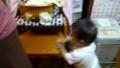 [20110809][九龍動画]