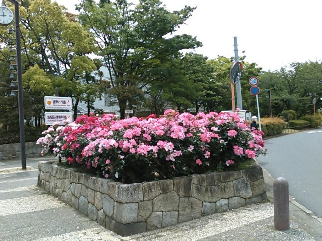 f:id:Oyamada23:20210512184316j:plain