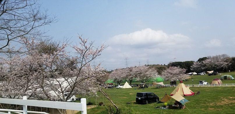 成田ゆめ牧場キャンプ場 桜 満開