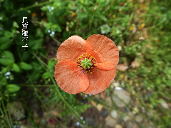 f:id:PANALI:20170430003408j:image
