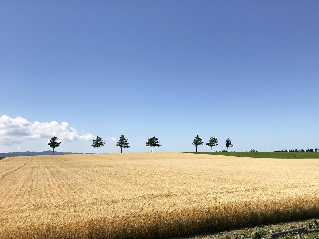夏の風景6