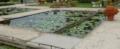 足利フラワーパークの水蓮