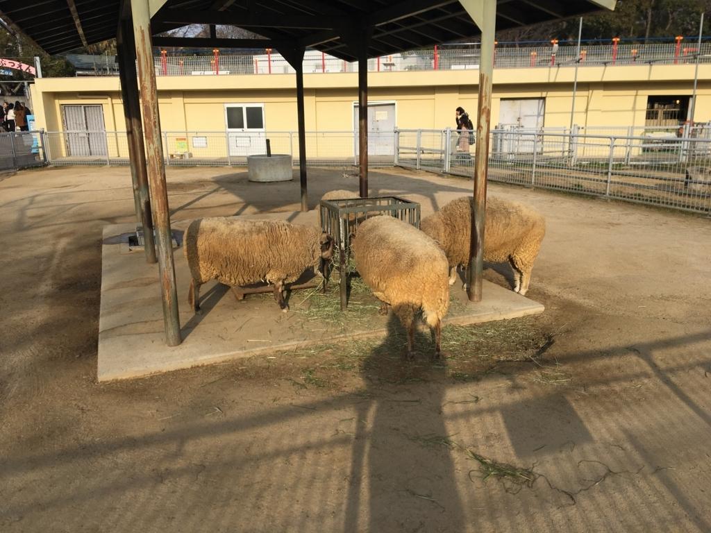 天王寺動物園 Tennojizoo 動物園 zoo