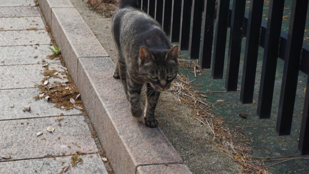 猫 cat 画像 写真 photo picture