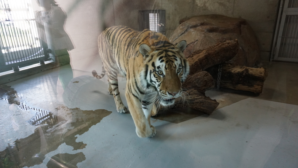 天王寺 動物 天王寺動物園 大阪 osaka animal