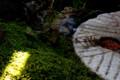[おかやまフェア][全国都市緑化フェア][岡山市西大寺][旧カネボウ跡地][苔]
