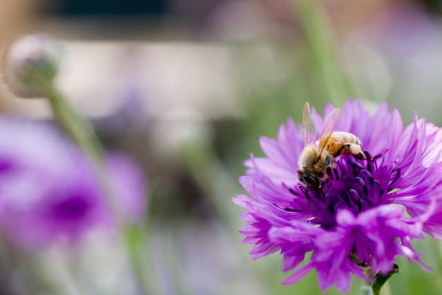 [岡山市東区西大寺][全国都市緑化フェア][蜂][蜜][花粉]