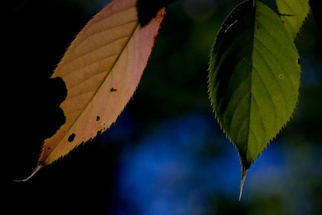 [さくら][紅葉][岡山市東区竹原][小鳥の森]