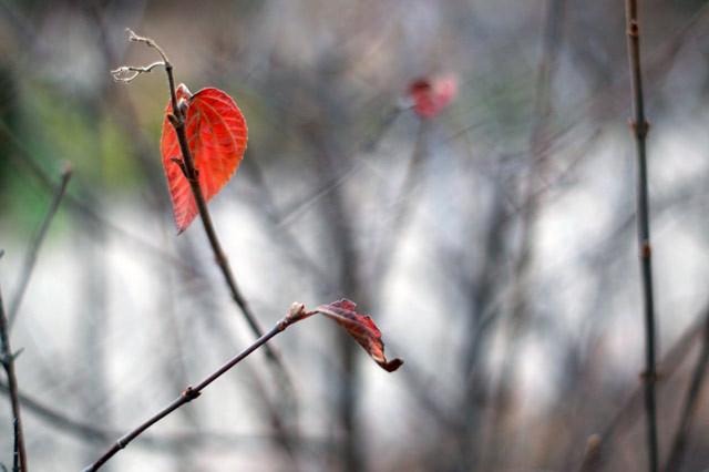 [枝に残る葉][冬]