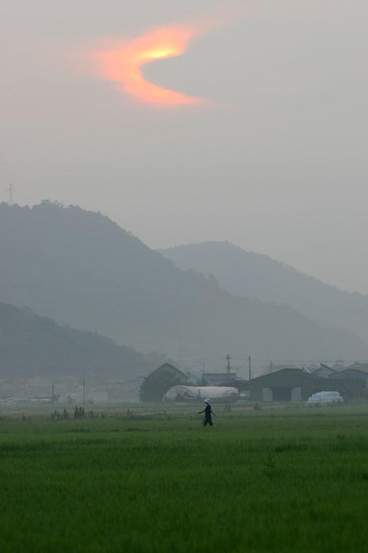 [田園風景][散歩][朝日]