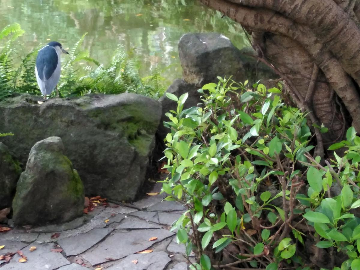 二二八和平公園にリス、鳥も