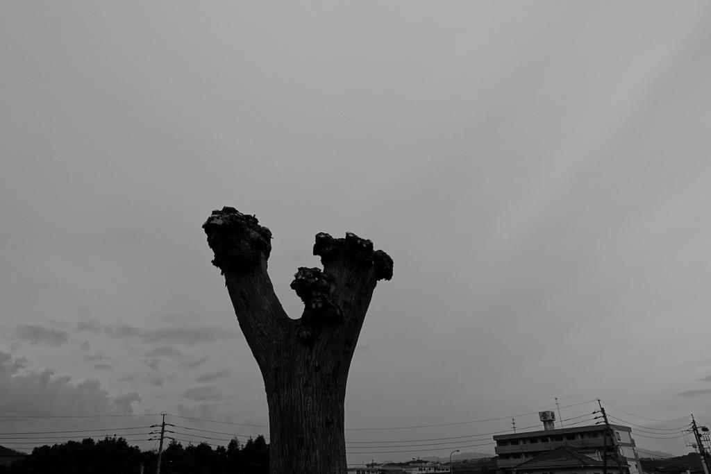 f:id:PapasCamera:20170107213002j:plain