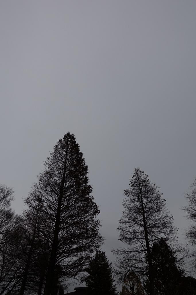f:id:PapasCamera:20170107213006j:plain