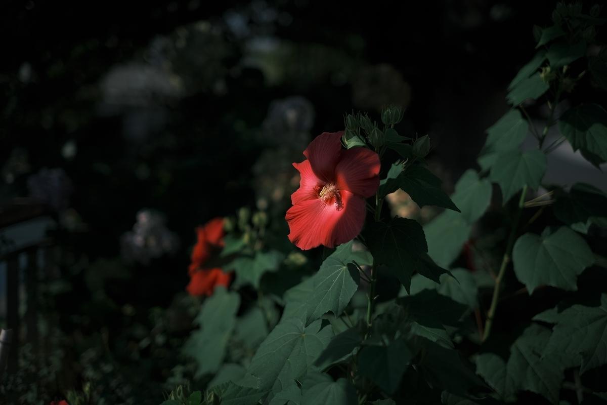 f:id:PapasCamera:20210729123142j:plain