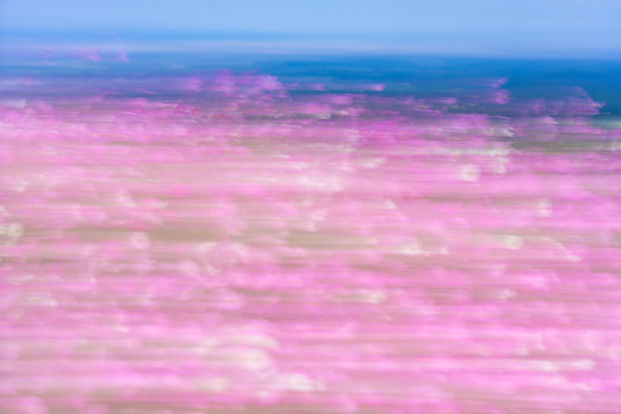 f:id:Paradisia:20201015072940j:plain
