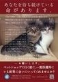 [猫][ネコ][ねこ]