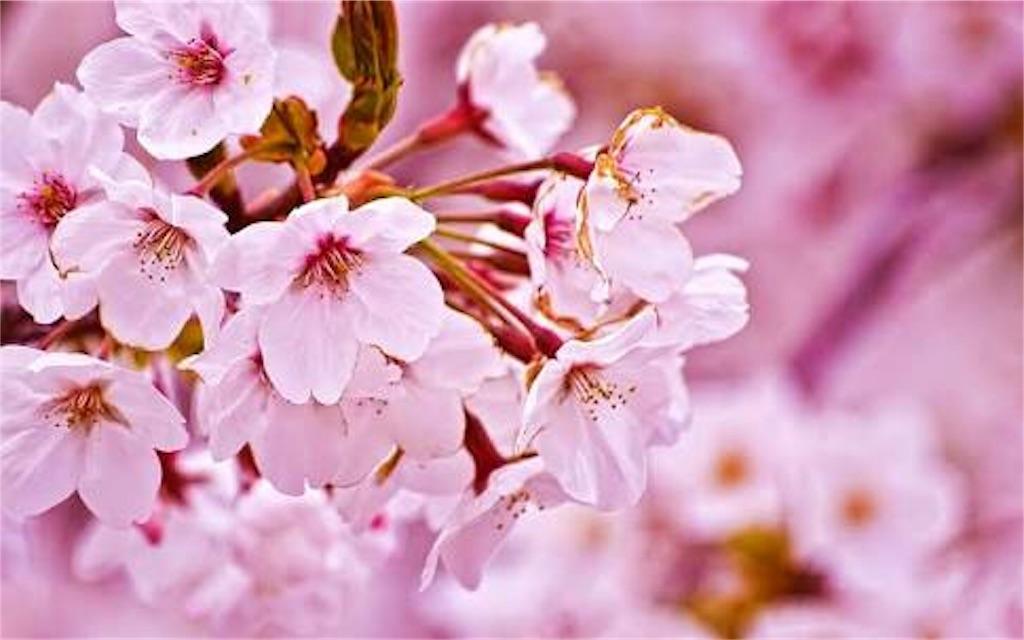 f:id:Peach_Blossom:20180227160020j:image