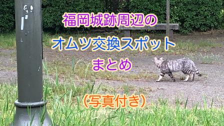f:id:Piyori78:20190524044715p:image