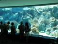 [うちなー弾丸ツアー]美ら海水族館