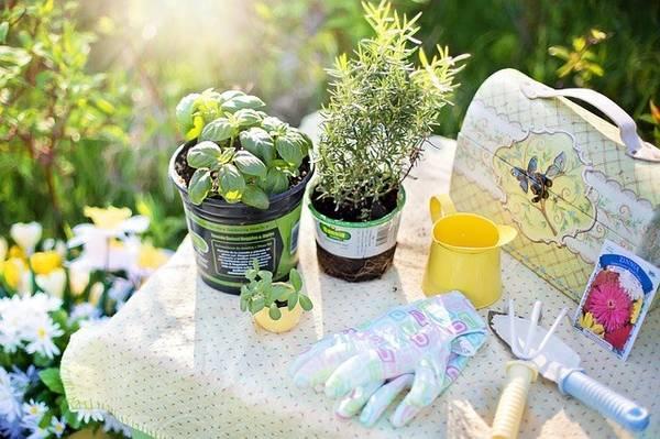 pakutaso、ガーデンテーブルでハーブ植え替え