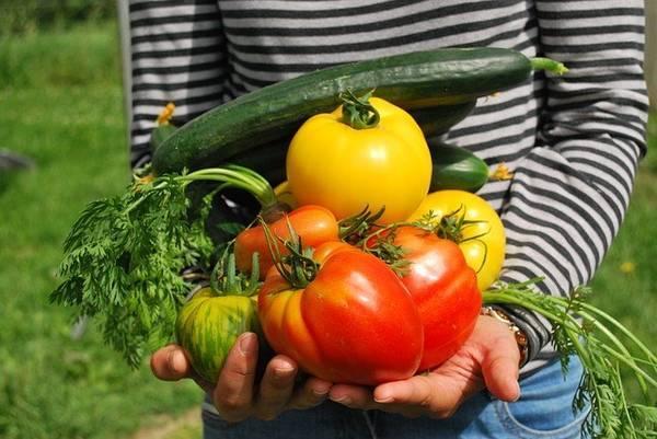 pakutaso、沢山の野菜を手に持つ人
