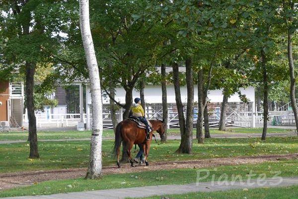 観光乗馬する子供