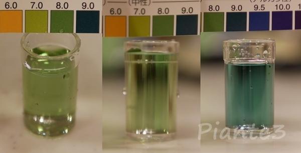 pH試験液で測定している写真