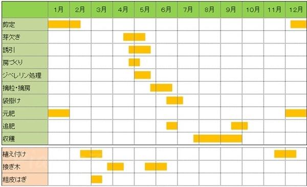 我が家の葡萄の栽培カレンダー