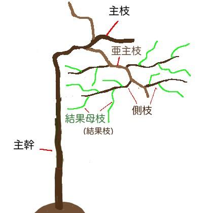 葡萄の木の枝の構成イラスト