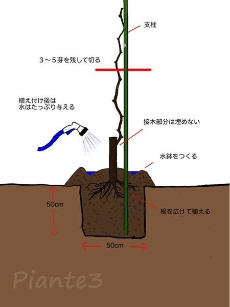 植え付けのイラスト