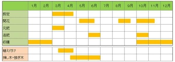 レモン栽培カレンダー