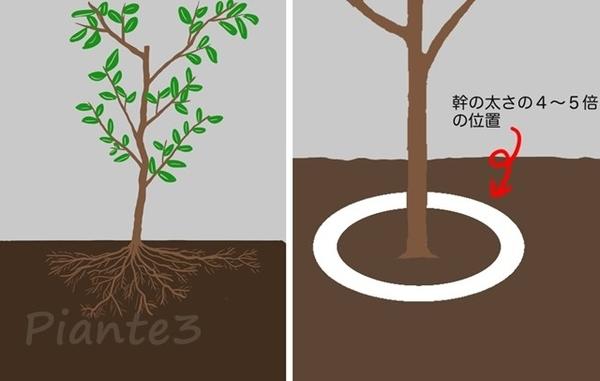 根回しの為の溝を掘るイラスト
